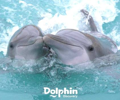 Dolphin Discovery 2